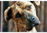 Please Help Pets